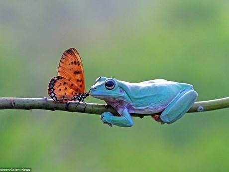 """Loạt ảnh """"Tình yêu bướm và ếch"""" gây sốt cộng đồng mạng"""