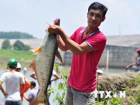 Người dân đổ xô bắt cá khi thủy điện Trị An ngưng xả nước