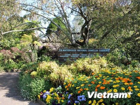 [Photo] Những sắc màu rực rỡ tại vườn hoa trà E.G Waterhouse