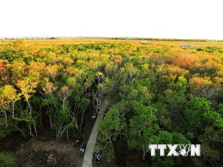 Rú Chá - rừng ngập mặn nguyên sinh quý hiếm trên phá Tam Giang
