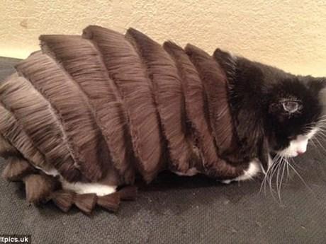 [Photo] Những bộ lông mèo độc đáo khiến ai cũng phải bật cười