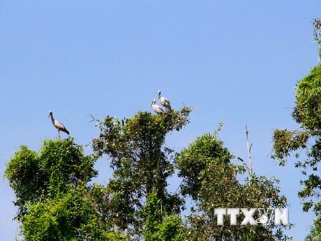 [Photo] Hàng chục ngàn chim về cư trú tại Vườn chim Mùa Xuân