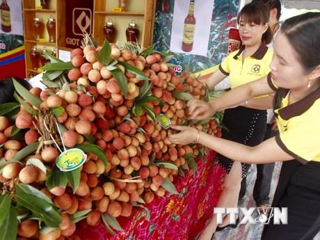 [Photo] Đặc sắc Lễ hội Vải thiều Thanh Hà-Hải Dương năm 2018