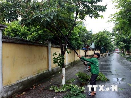 Thái Bình, Hải Phòng và Móng Cái chủ động phòng chống bão số 4