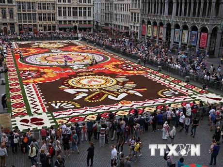 Chiêm ngưỡng tấm thảm hoa hải đường khổng lồ tại quảng trường nước Bỉ