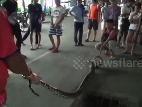 Em bé hoảng sợ phát hiện ra con trăn khổng lồ trốn trong bồn cầu