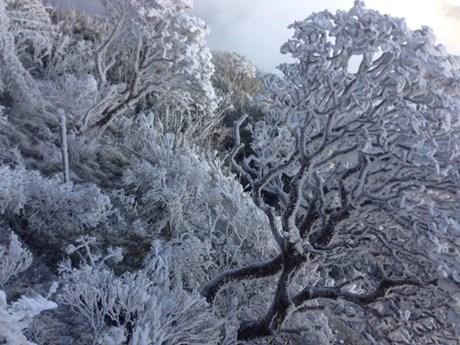 [Photo] Cận cảnh băng tuyết phủ kín 'nóc nhà Đông Dương '