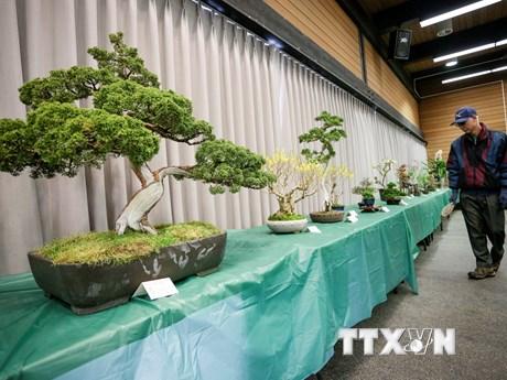 Đặc sắc Triển lãm hoa xuân và nghệ thuật bonsai tại Canada