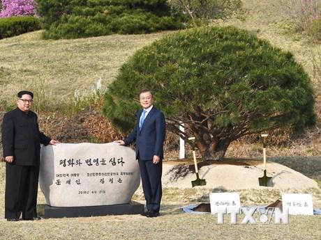 [Photo] Lãnh đạo hai miền Triều Tiên trồng cây hòa bình