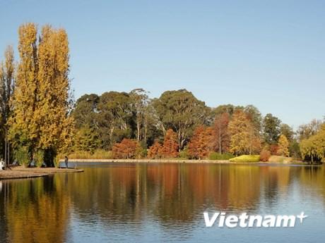 [Photo] Đắm chìm trong mùa Thu quyến rũ ở Canberra
