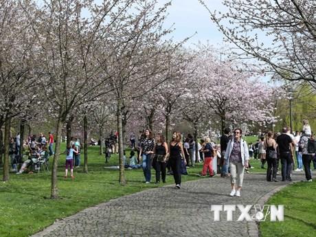[Photo] Khoảng 25.000 du khách đến Lễ hội Hoa Anh đào lần 12 ở Berlin