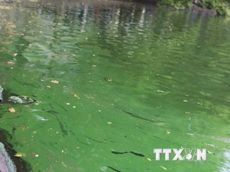 [Photo] Hà Nội: Nước ven bờ hồ Gươm đặc quánh màu lam lục