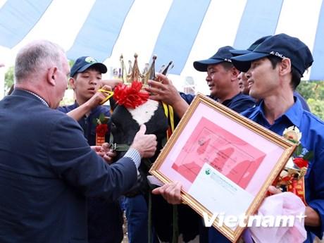 """[Photo] Độc đáo cuộc thi """"hoa hậu"""" bò sữa trên cao nguyên Mộc Châu"""