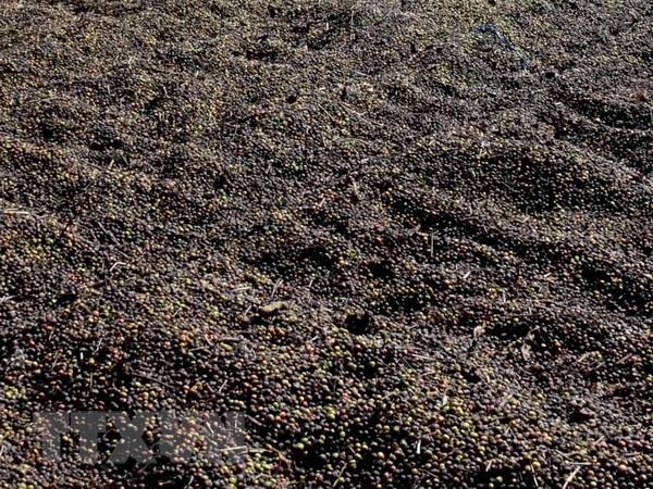 Bắt quả tang cơ sở chế biến càphê bẩn tại tỉnh Đắk Nông - ảnh 1