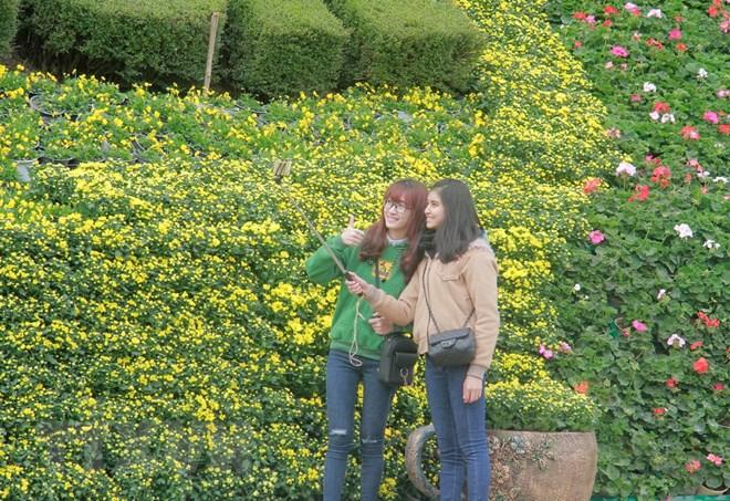 Chụp ảnh bên những thảm hoa ở Đà Lạt. Ảnh: Đặng Tuấn/TTXVN
