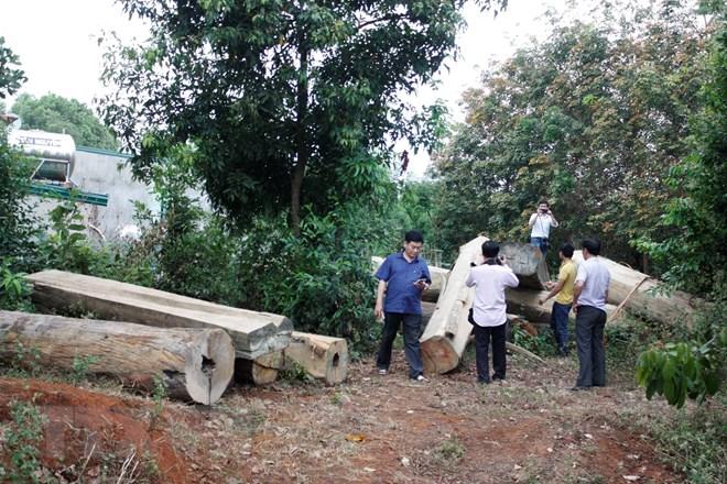 Gia Lai: Khiển trách 3 nhân viên để xảy ra tình trạng phá rừng - ảnh 1