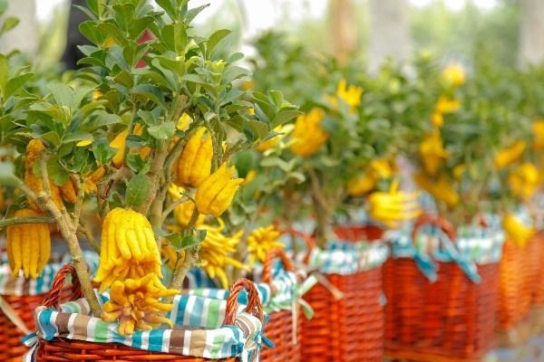 Người Việt bỏ 18 triệu USD nhập hoa, cây cảnh trước Tết Nguyên đán - ảnh 1