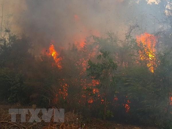 Quảng Nam: Cháy dữ dội tại rừng dương liễu chắn cát ven biển - ảnh 1