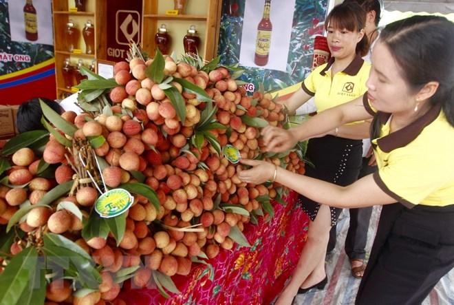 Kết quả hình ảnh cho Lễ hội vải thiều Thanh Hà-Hải Dương 2018