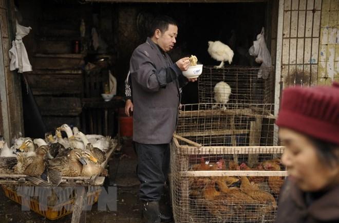 Xuất hiện ca nhiễm cúm H7N4 đầu tiên trên thế giới ở Trung Quốc - ảnh 1