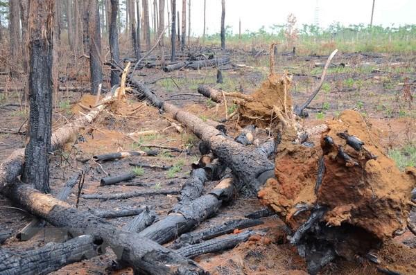 Vụ phá rừng tại Đắk Nông: Tạm giữ khẩn cấp Phó trạm quản lý rừng - ảnh 1