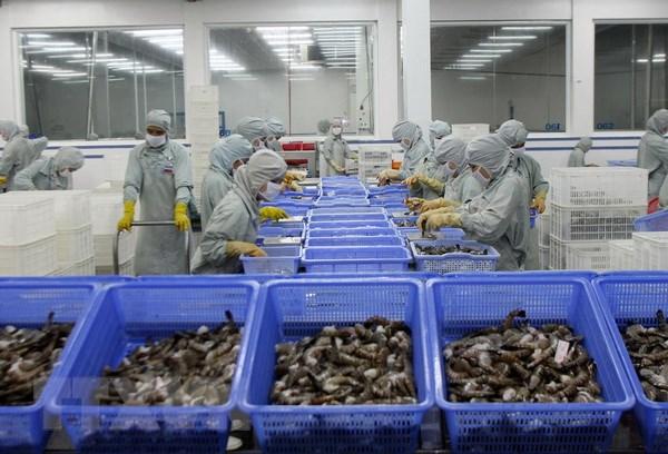 Chế biến tôm xuất khẩu tại Hậu Giang. Ảnh: Huy Hùng/TTXVN