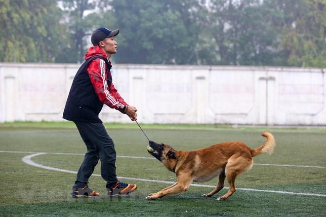 Thót tim với những màn thao diễn của chó Béc Bỉ ngàn đô - ảnh 1