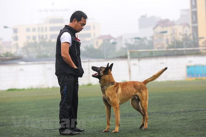 Thót tim với những màn thao diễn của chó Béc Bỉ ngàn đô - ảnh 10