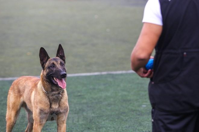 Thót tim với những màn thao diễn của chó Béc Bỉ ngàn đô - ảnh 11