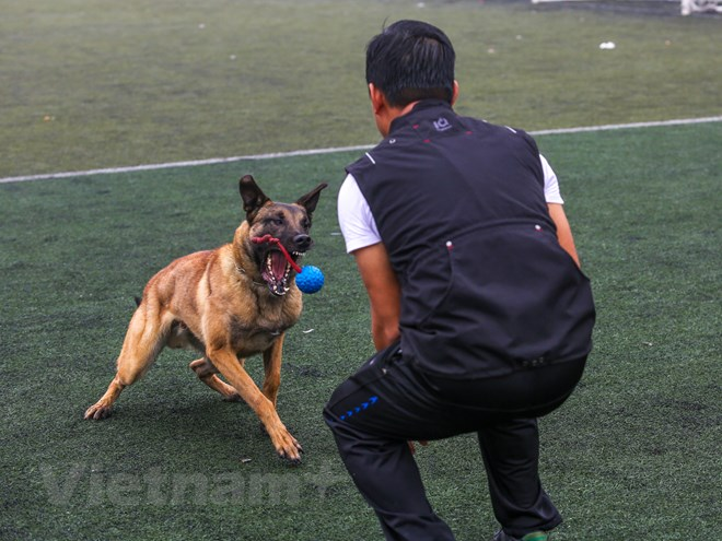 Thót tim với những màn thao diễn của chó Béc Bỉ ngàn đô - ảnh 12