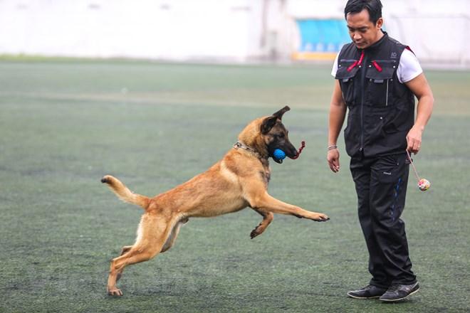 Thót tim với những màn thao diễn của chó Béc Bỉ ngàn đô - ảnh 13