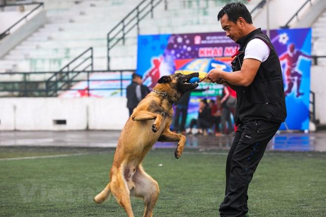 Thót tim với những màn thao diễn của chó Béc Bỉ ngàn đô - ảnh 14