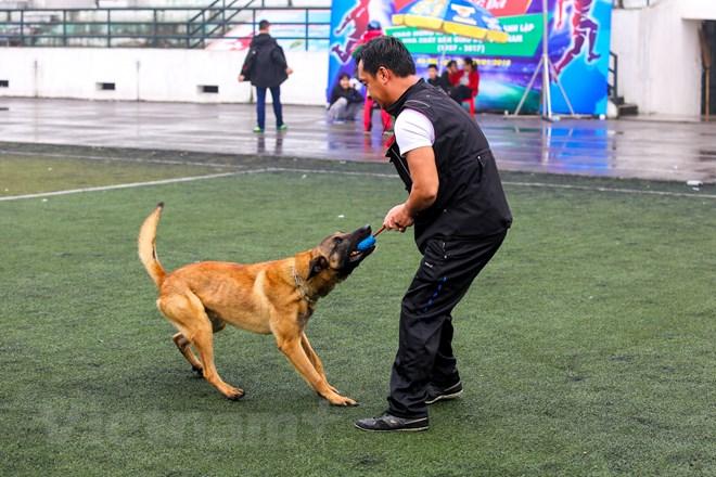 Thót tim với những màn thao diễn của chó Béc Bỉ ngàn đô - ảnh 15