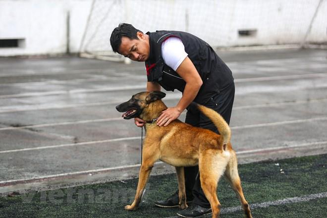 Thót tim với những màn thao diễn của chó Béc Bỉ ngàn đô - ảnh 16