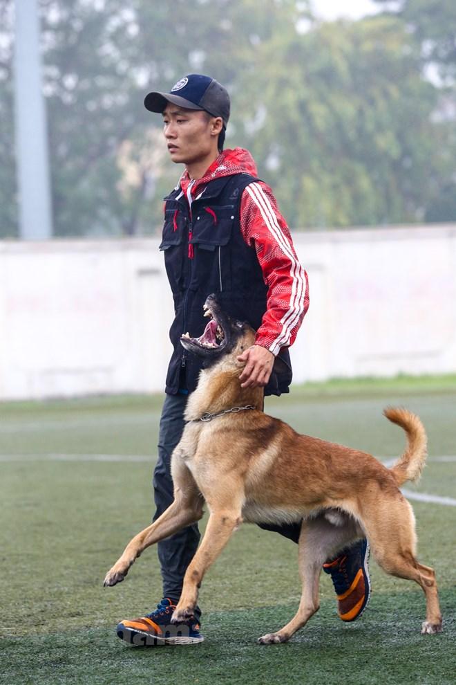 Thót tim với những màn thao diễn của chó Béc Bỉ ngàn đô - ảnh 18
