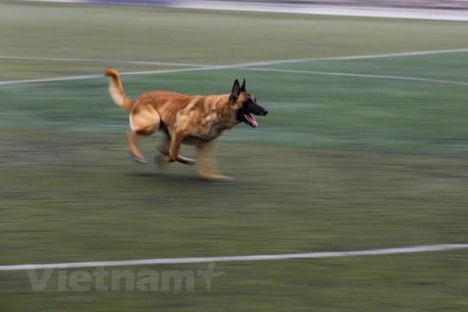 Thót tim với những màn thao diễn của chó Béc Bỉ ngàn đô - ảnh 20