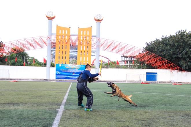 Thót tim với những màn thao diễn của chó Béc Bỉ ngàn đô - ảnh 21