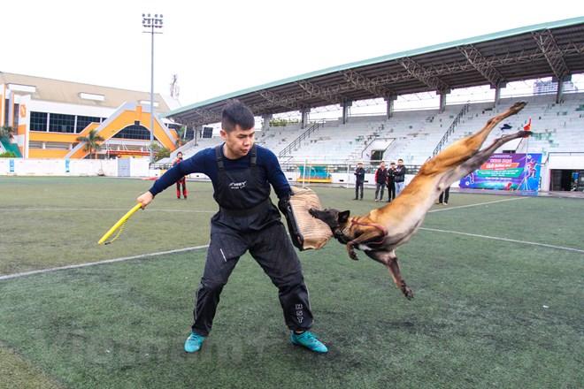 Thót tim với những màn thao diễn của chó Béc Bỉ ngàn đô - ảnh 22