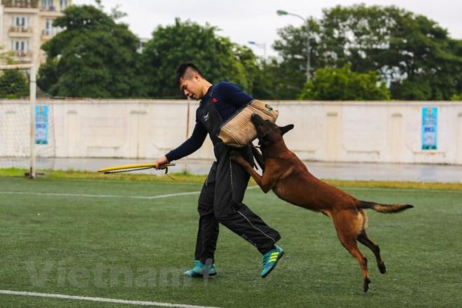 Thót tim với những màn thao diễn của chó Béc Bỉ ngàn đô - ảnh 23