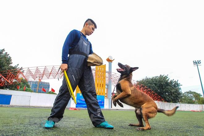 Thót tim với những màn thao diễn của chó Béc Bỉ ngàn đô - ảnh 24