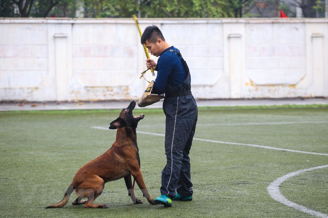 Thót tim với những màn thao diễn của chó Béc Bỉ ngàn đô - ảnh 25