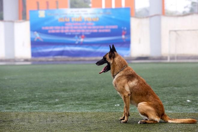 Thót tim với những màn thao diễn của chó Béc Bỉ ngàn đô - ảnh 3