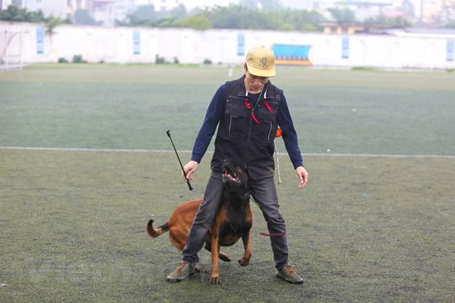Thót tim với những màn thao diễn của chó Béc Bỉ ngàn đô - ảnh 4