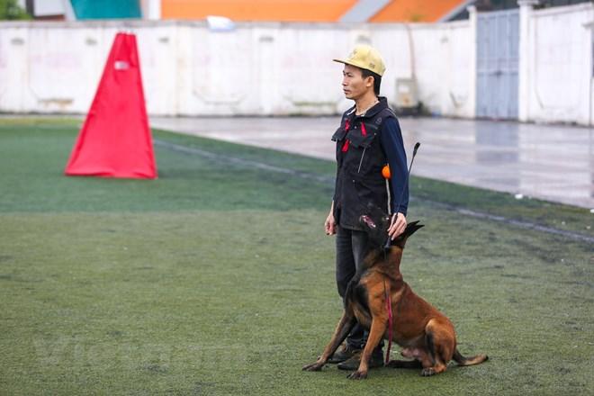 Thót tim với những màn thao diễn của chó Béc Bỉ ngàn đô - ảnh 5