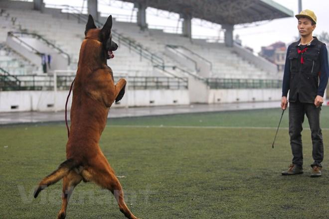 Thót tim với những màn thao diễn của chó Béc Bỉ ngàn đô - ảnh 6