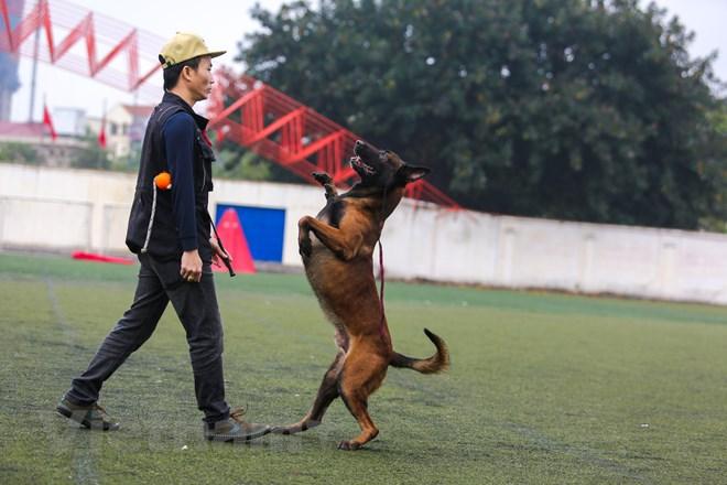 Thót tim với những màn thao diễn của chó Béc Bỉ ngàn đô - ảnh 7