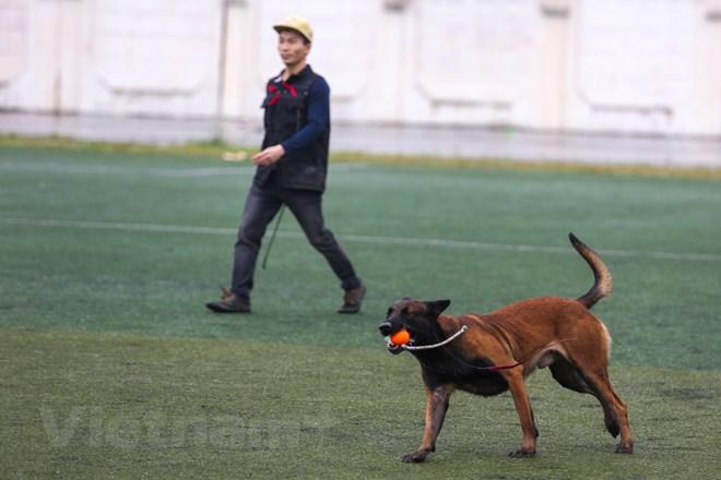 Thót tim với những màn thao diễn của chó Béc Bỉ ngàn đô - ảnh 8